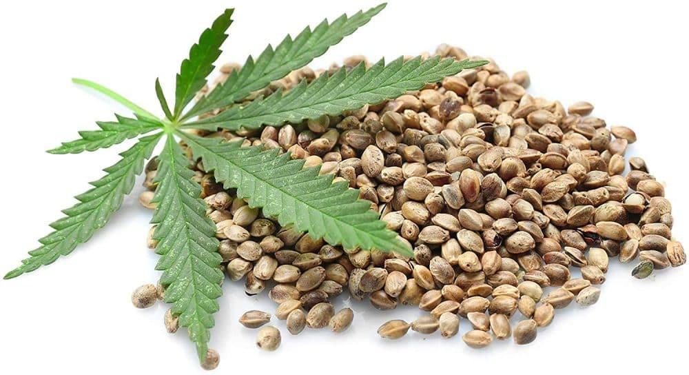 quelles graines de cannabis choisir