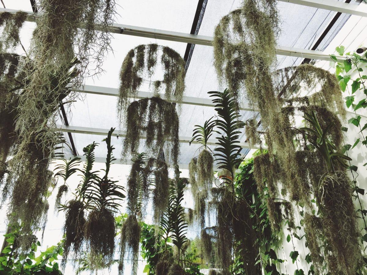 7 idées de création de plantes retombantes pour l'extérieur