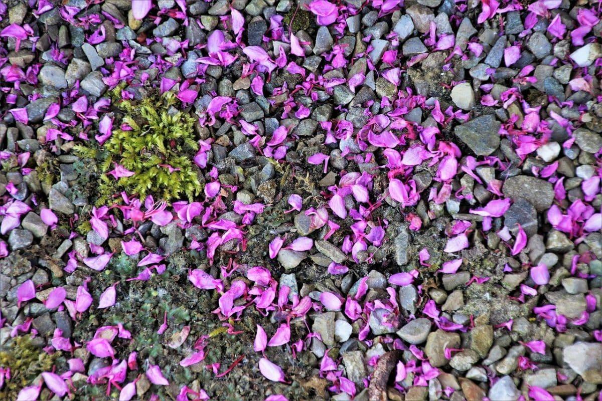 décorer avec cailloux pour jardin