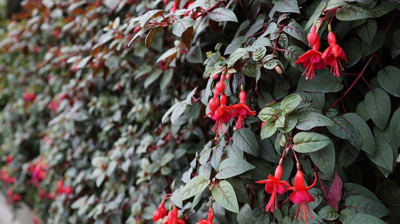 créer un mur végétal chez soi