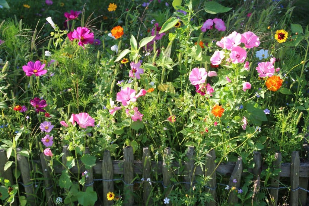 aménager un vaste jardin choisir plante