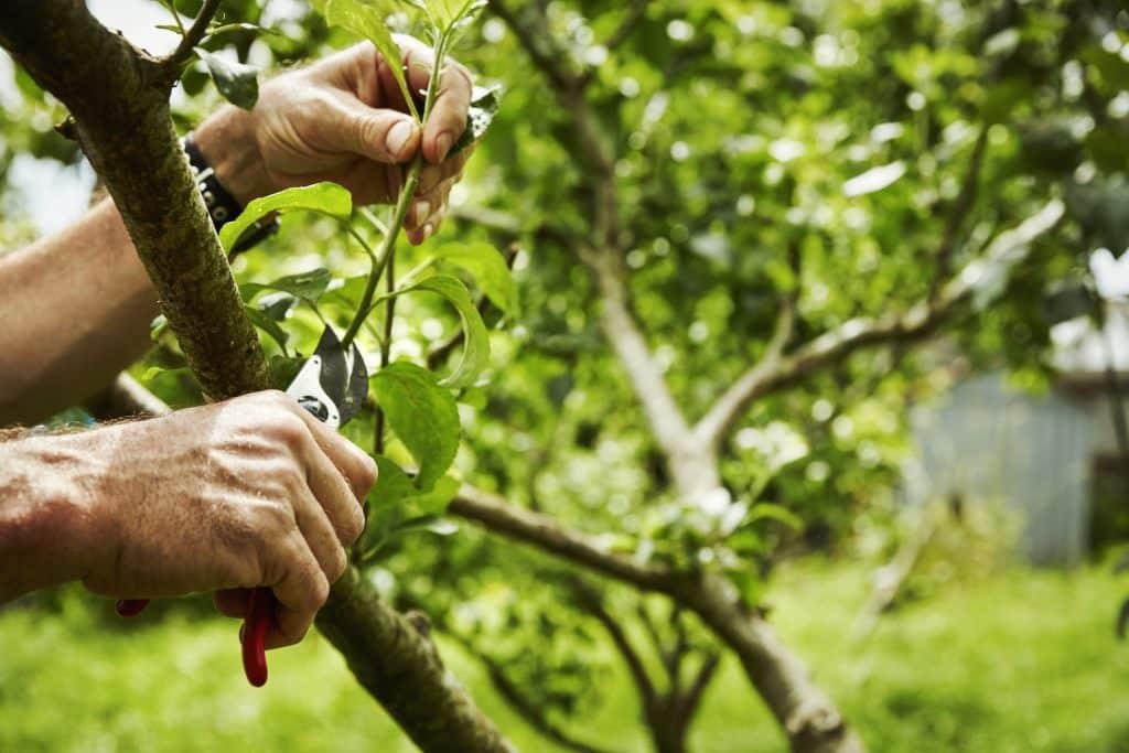 arbres fruitiers pour jardin choix des arbres