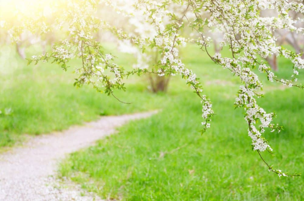 arbres fruitiers pour jardin en fonction de la région