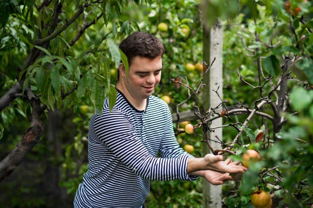 arbres fruitiers pour jardin conseils