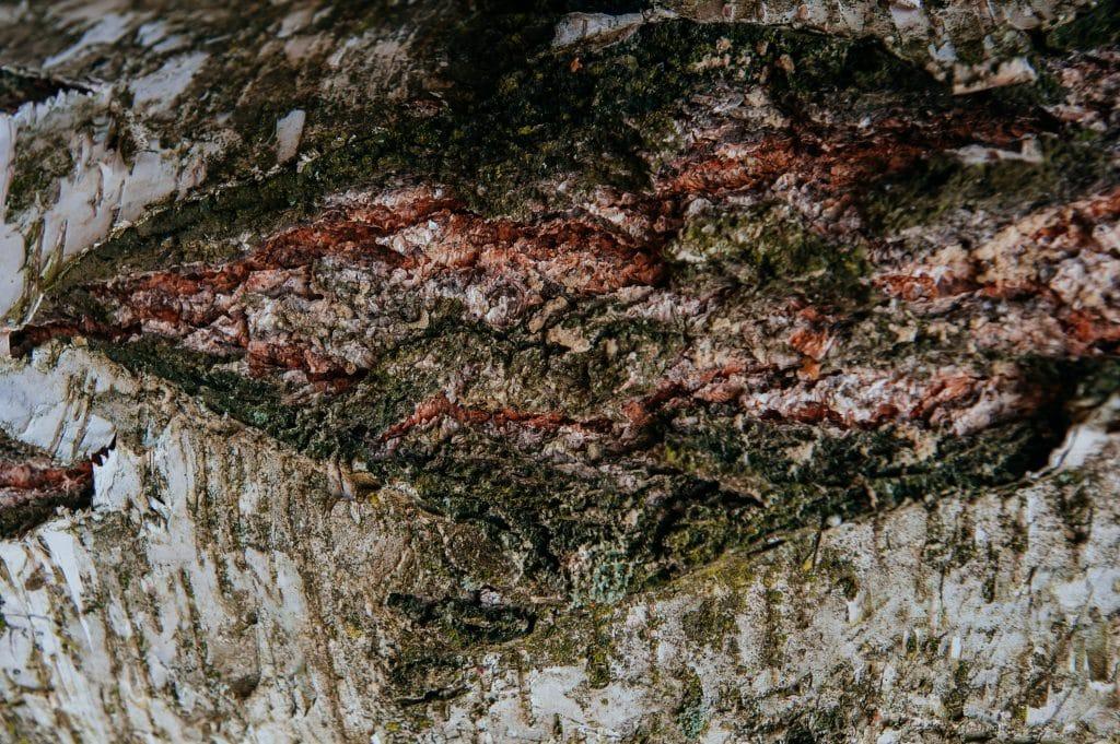 bouche run trou dans un tronc d'arbre précautions