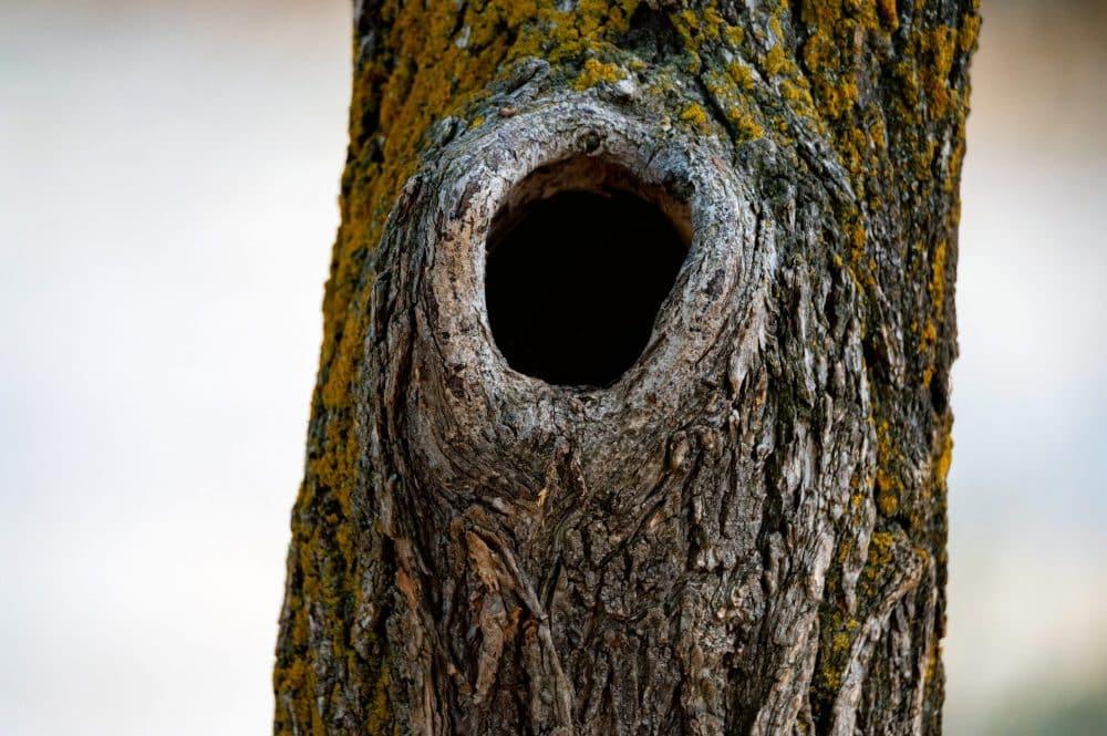 comment bouche run trou dans un tronc d'arbre