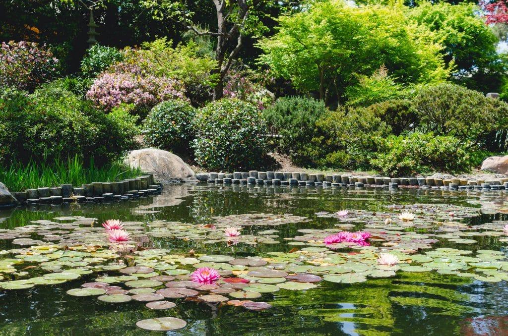bassin de jardin mon royaume pour un bassin